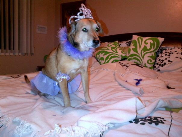 NYE - because who doesn't dress their dog up in a tiara on New Year's Eve at midnight?!?